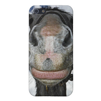 Horse Nose Knows! Funny Smiling Horse iPhone SE/5/5s Cover