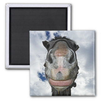 Horse Nose Knows! Funny Smiling Horse Magnet