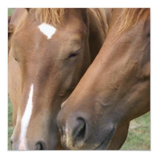 """Horse Nuzzle Invitations 5.25"""" Square Invitation Card"""
