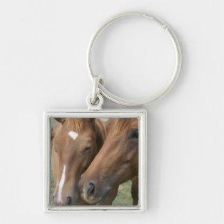 Horse Nuzzle Keychain