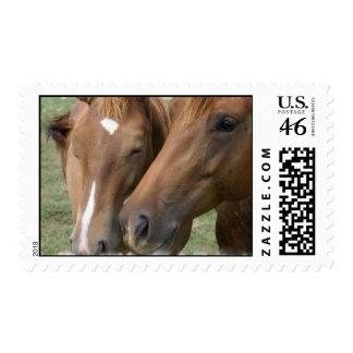 Horse Nuzzle Postage Stamp