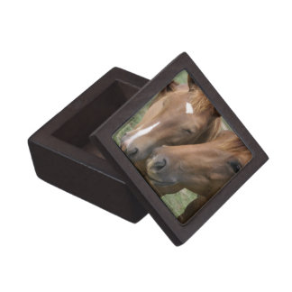 Horse Nuzzle Premium Gift Box