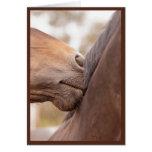 Horse Nuzzle Valentine Greeting Card