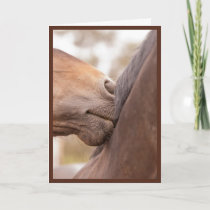 Horse Nuzzle Valentine Holiday Card