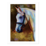 Horse of Colours - Horse painting Postcard