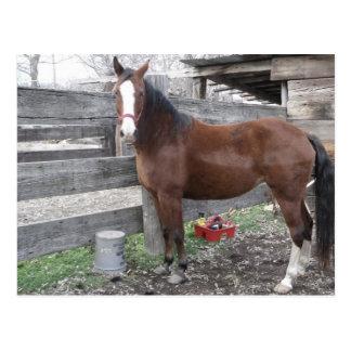 Horse of course Postcard