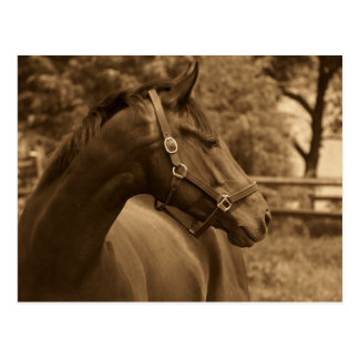 Horse of My Heart Post Cards