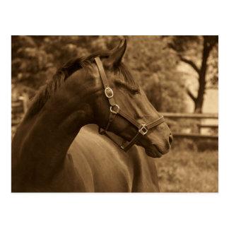Horse of My Heart Postcard