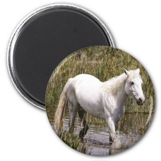 horse of the Camargue 2 Inch Round Magnet
