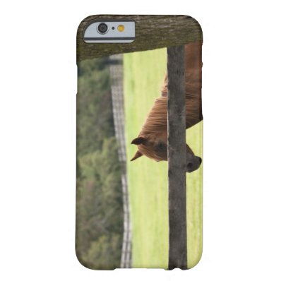 Horse on a farm relaxing by a tree barely there iPhone 6 case