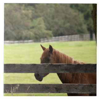Horse on a farm relaxing by a tree ceramic tile