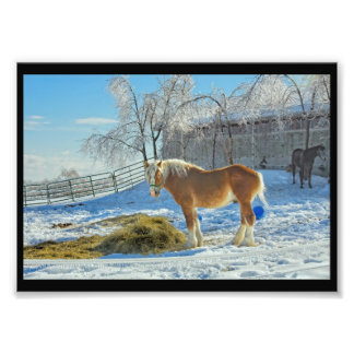 Horse On Farm After Snow And Ice Storm Photo Print