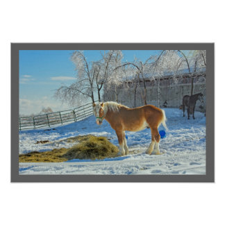 Horse On Farm After Snow And Ice Storm Poster