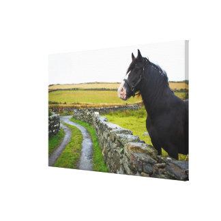 Horse on farm in rural England Canvas Print