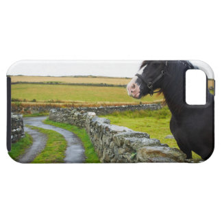 Horse on farm in rural England iPhone SE/5/5s Case