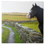 Horse on farm in rural England Large Square Tile