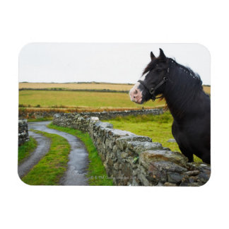 Horse on farm in rural England Magnet