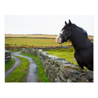 Horse on farm in rural England Postcard