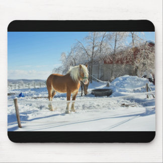 Horse On Maine Farm After Snow And Ice Storm Mouse Pad