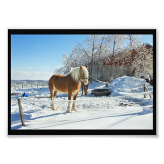 Horse On Maine Farm After Snow And Ice Storm Photographic Print