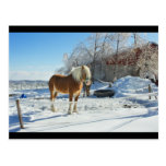 Horse On Maine Farm After Snow And Ice Storm Postcard