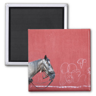 Horse on Red Background Magnet