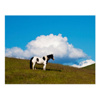 Horse on the hill side postcard