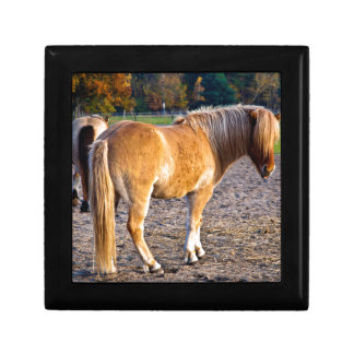Horse ouple in the autumn light jewelry box