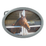Horse Oval Belt Buckle