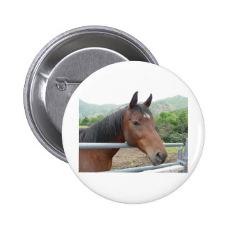 horse over fence button