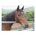 horse over fence invitations