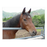 horse over fence postcard
