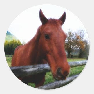 Horse Over Fence Rails Photographic Portrait Classic Round Sticker