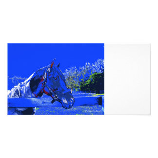 horse over fence side view blue cartoon photo card
