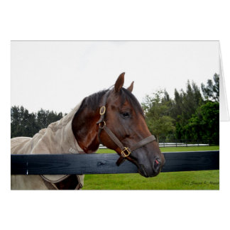 horse over fence side view card