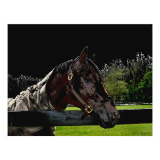horse over fence side view dark colors personalized flyer