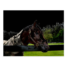 horse over fence side view dark colors postcard