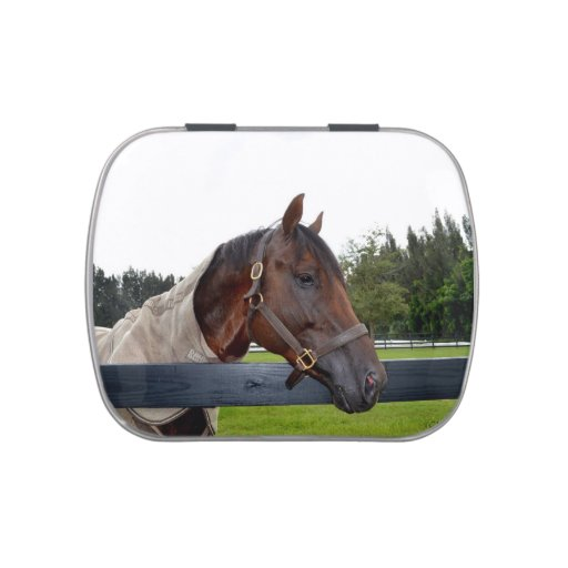 horse over fence side view jelly belly candy tins