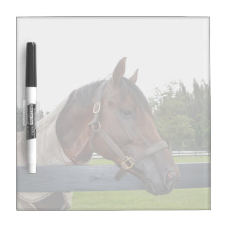 horse over fence side view sky change dry erase board