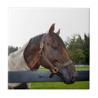 horse over fence side view small square tile