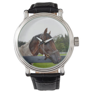 horse over fence side view watch