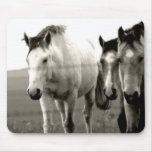 Horse pad in black and white mouse pads