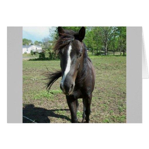 Horse Paint Card