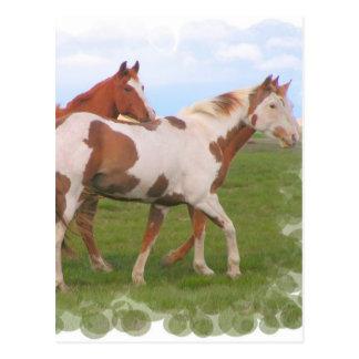Horse Pair Postcard