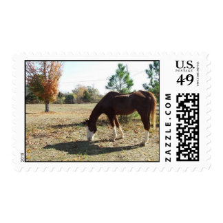 Horse & Pasture Stamps