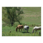 Horse Pasture Posters