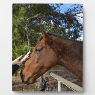 Horse_Pat,_ Plaque