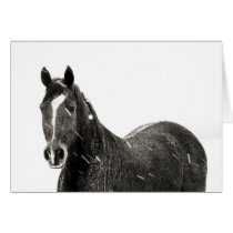 Horse Peace on Earth Holiday Card