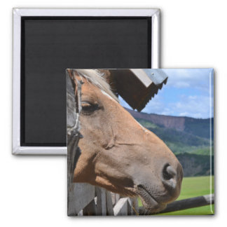 Horse Peaking Outside Magnet