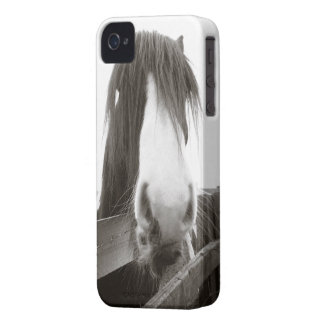 Horse Peering Over Fence iPhone 4 Case
